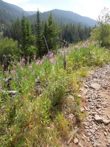 Oregon hike