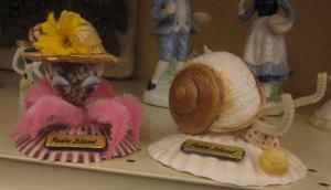 Padre Island Shells