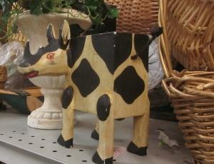 Rhino Cow looks awfully jittery