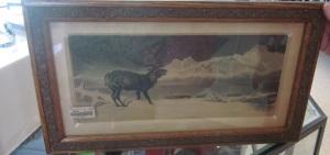 Wary Elk