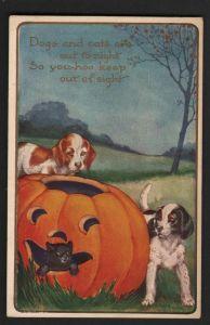 puppies-and-pumpkins