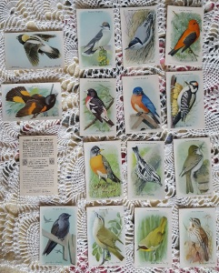 Bird Cards2